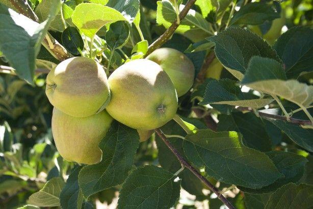 Foto 3 de Joeldifrutas - Comércio de Frutas, Lda.
