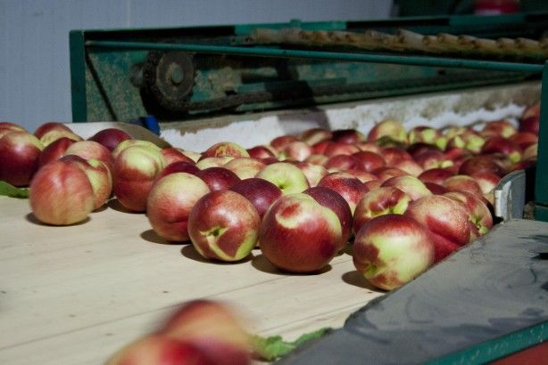 Foto 4 de Joeldifrutas - Comércio de Frutas, Lda.