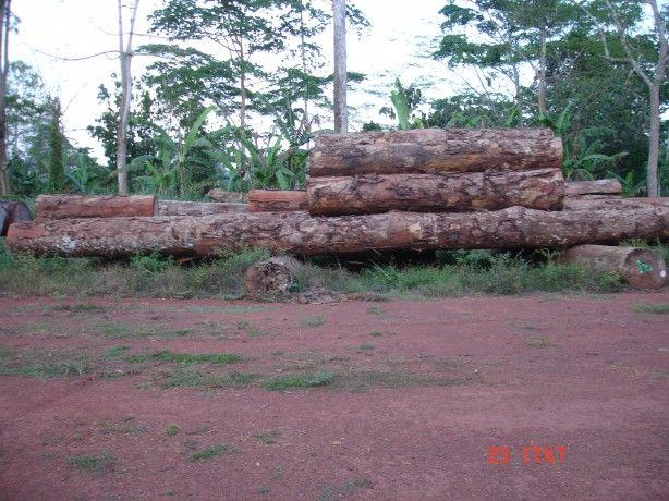 Foto 2 de W4 E.I. - Exportação e Importação de Madeiras, Ldª