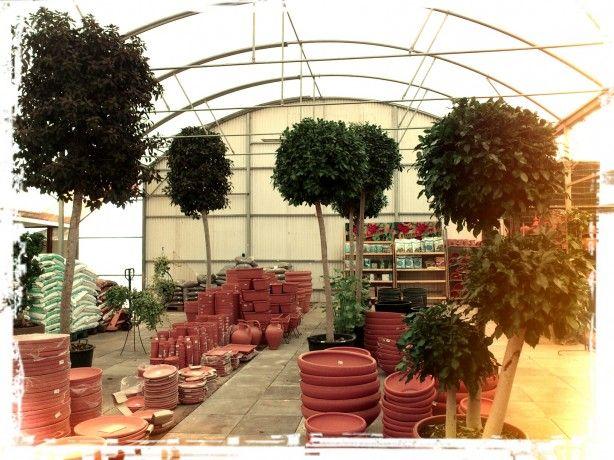Foto 1 de Quinta da Ataboeira - Centro de Jardinagem