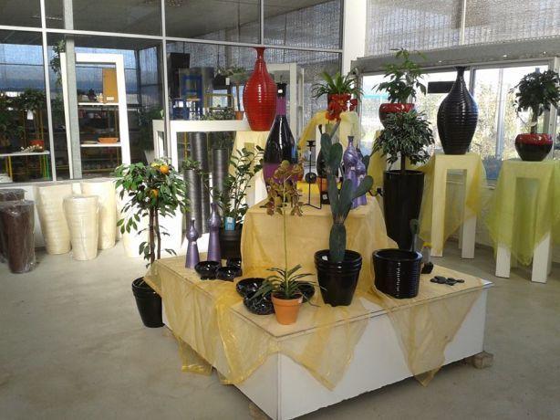 Foto 4 de Iberplanta - Empreendimentos Paisagisticos e Floricola, Lda