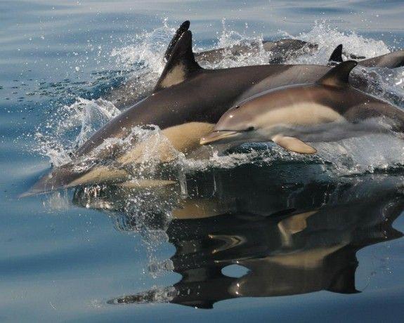 Foto 1 de Seabookings - Plataforma Online de Atividades Turísticas