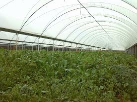 Foto 2 de Ductiocova - Produção de Caracois e Produtos Agricolas, Lda