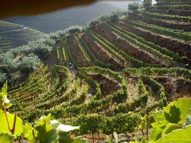 Foto 1 de Casa Azeredo - Vinho e Azeite do Douro