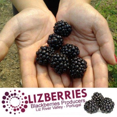 Foto 1 de Lizberries - Produtores de Amoras do Vale do Liz, Lda